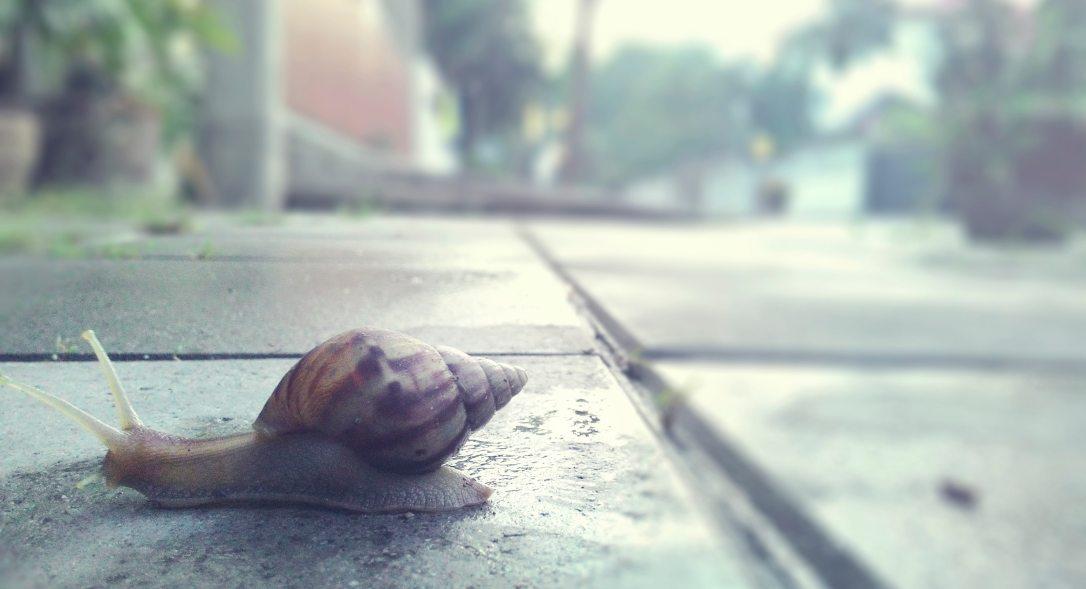 animal-asphalt-blur-1268557